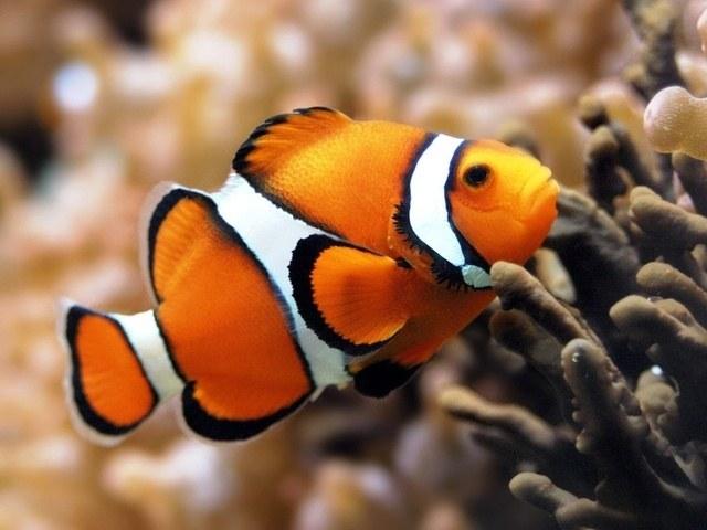 Правда ли, что рыба снится к беременности