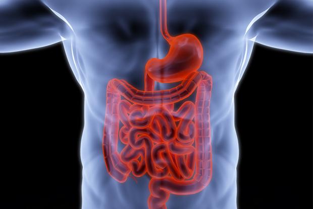 Какие ферменты участвуют в пищеварении