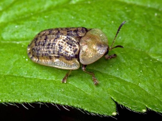 Что такое инсектициды