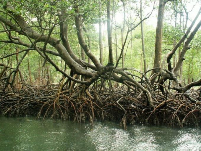 Где находятся черные леса