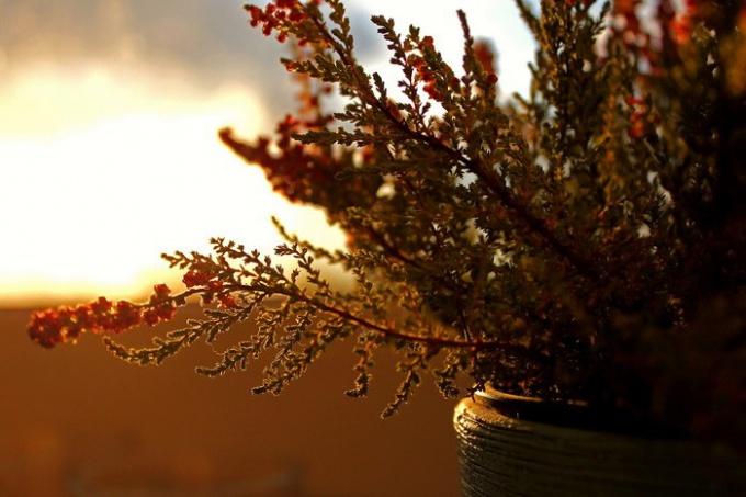 http://www.freeimages.com/pic/l/p/pe/pezet-100/1365831_41121254.jpg