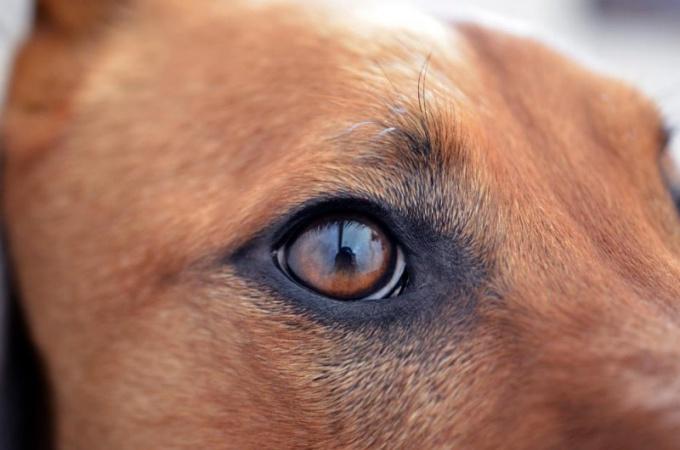 Человек собаке - друг