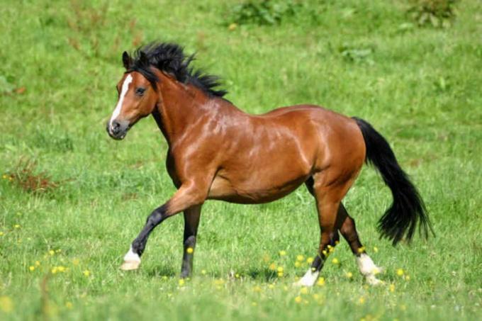 Как успокоить коня