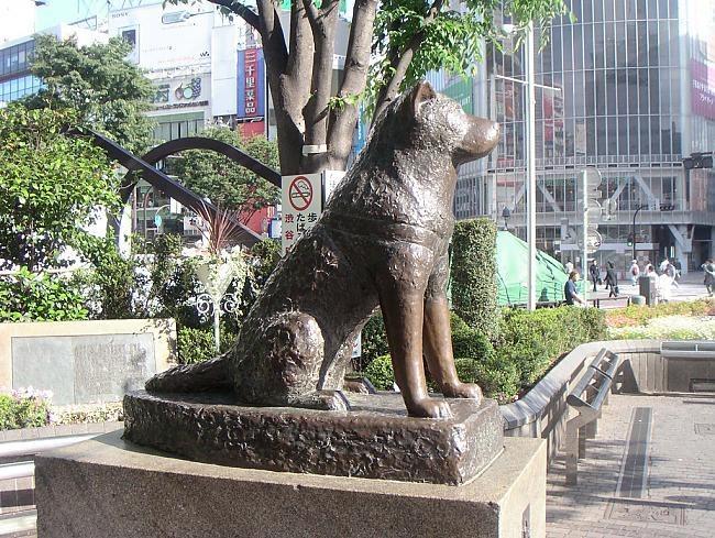 Памятник верному псу Хатико находится в Токио