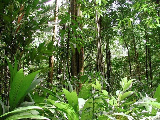 Какие животные водятся во влажных экваториальных лесах