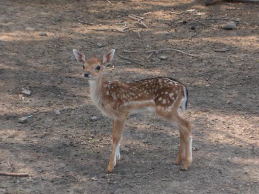 Как и почему меняется численность животных в дикой природе