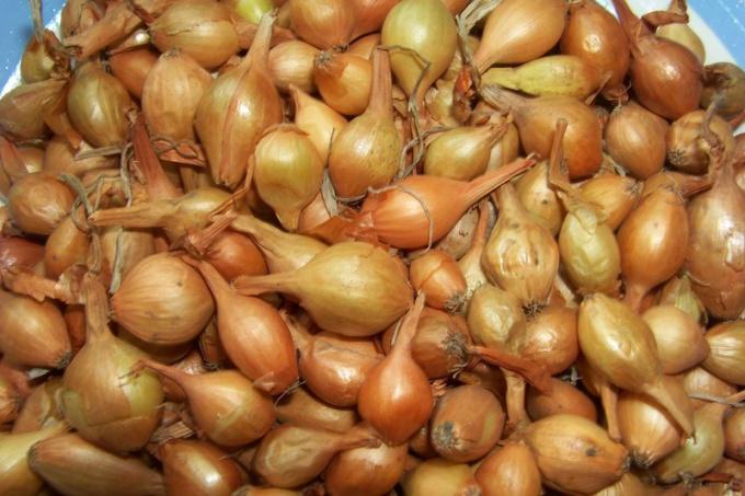 8 причин для выращивания лука-репки из севка