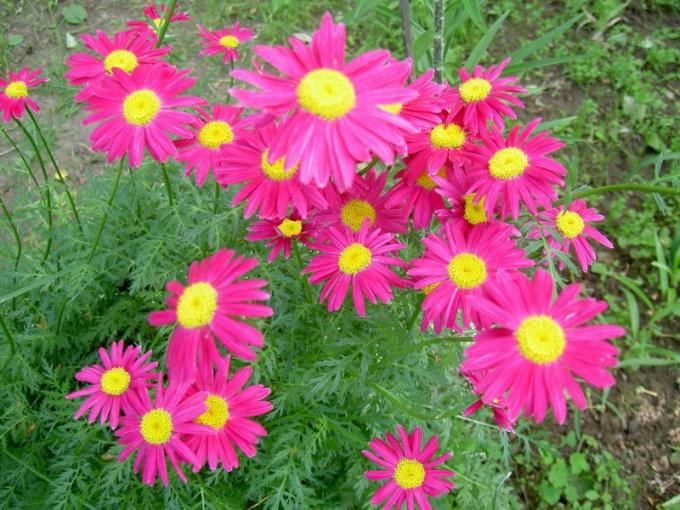 Уход за цветами в июне и июле