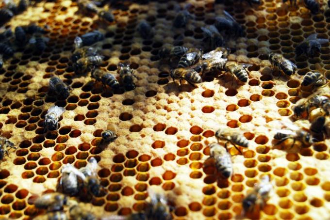 Пчелиное маточное молочко в косметологии