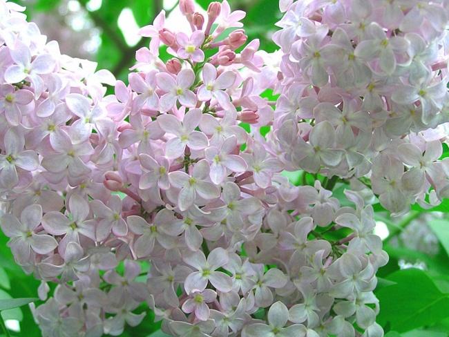 Цветы из атласными ленточками