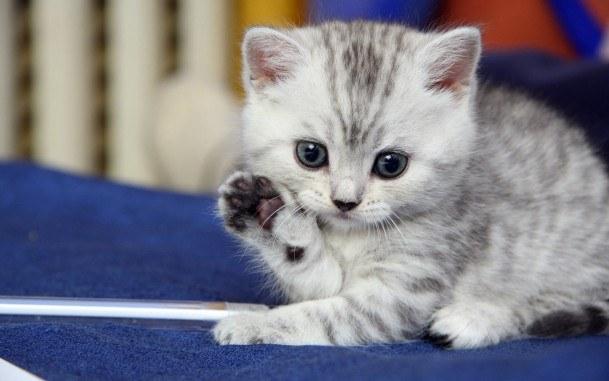 Уютная кошка