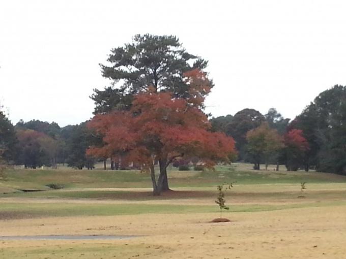 Осенью цвет крон лиственных деревьев меняется