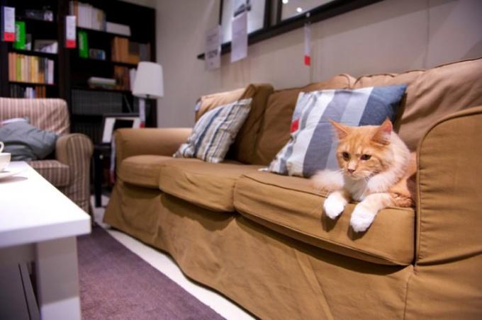 подготовить кошку к переезду