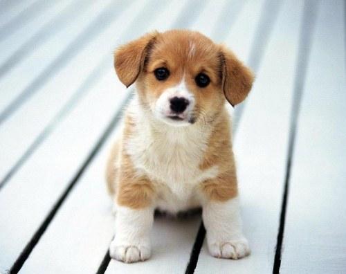 Как наказывать щенка
