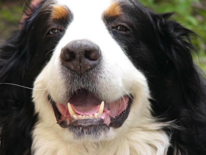 избежать зубных болезней у собак