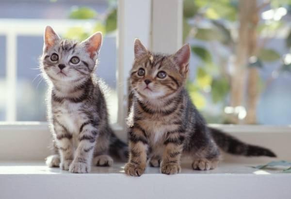 Как должен выглядеть котенок