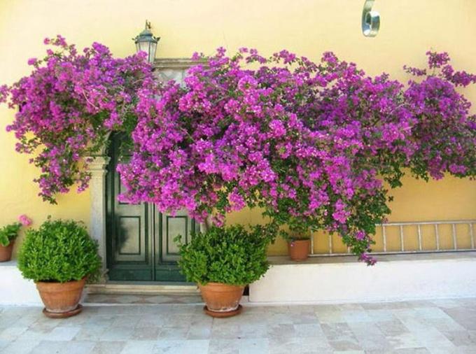 Цветы на фасаде дома