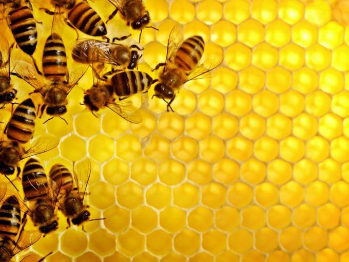 Кормим пчел зимой