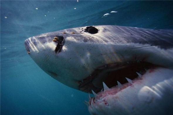 Какие художественные фильмы об акулах можно посмотреть