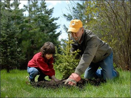 Какое дерево или кустарник лучше посадить возле дома