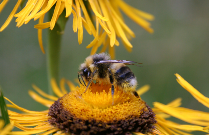 Рецепт настойки на мертвых пчелах (подморе)