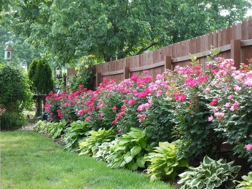 What to plant along the fence