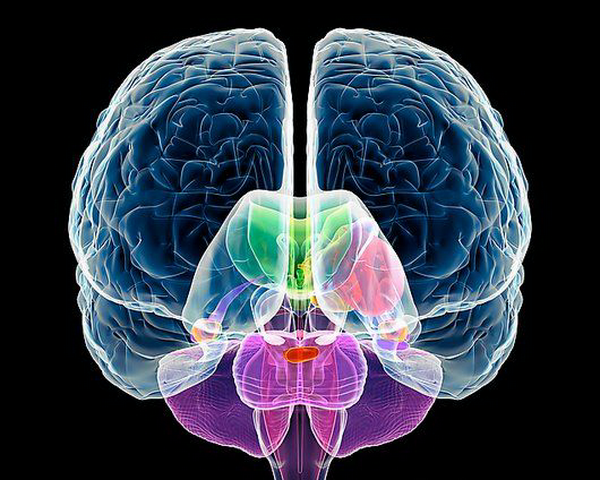 How to find out which hemisphere of the brain you have more developed