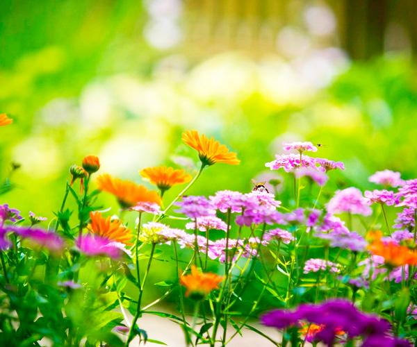 Сделать цветочную клумбу