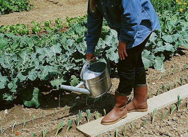 Как предпочесть садовую лейку