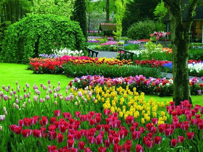 сады кейкенхоф фото