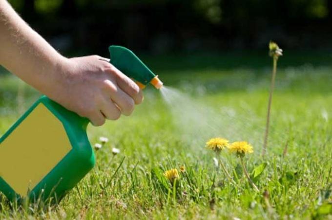 Борьба с сорняками при помощи подручных средств