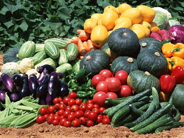 Какие консервы можно приготовить из овощей