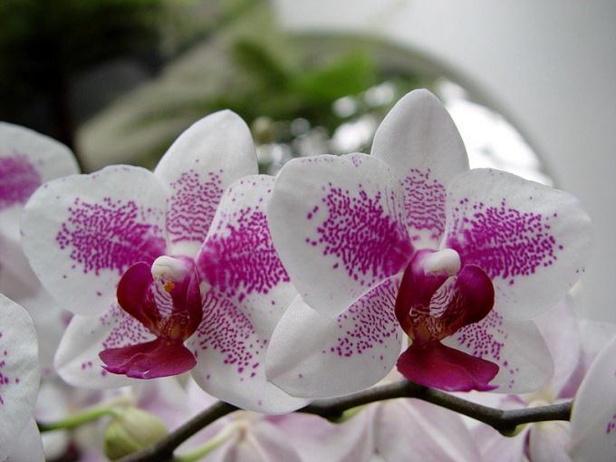 Все про орхидеи: как ухаживать