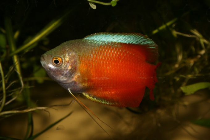 На теле здоровой рыбы не должно быть никаких налетов и высыпаний