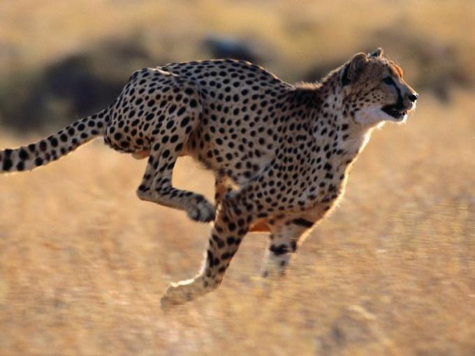 Какие животные бегают быстрее всех