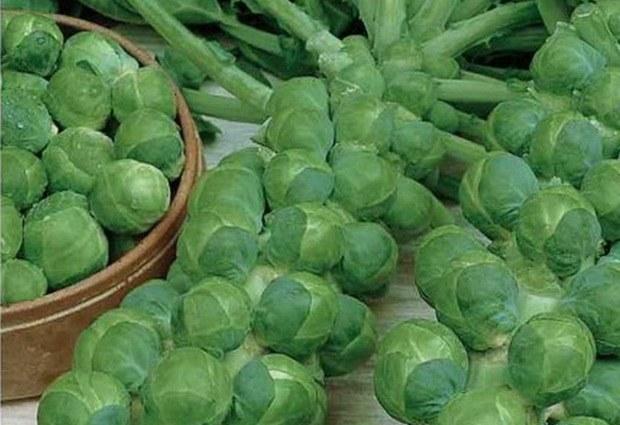 Как выглядит и чем полезна брюссельская капуста