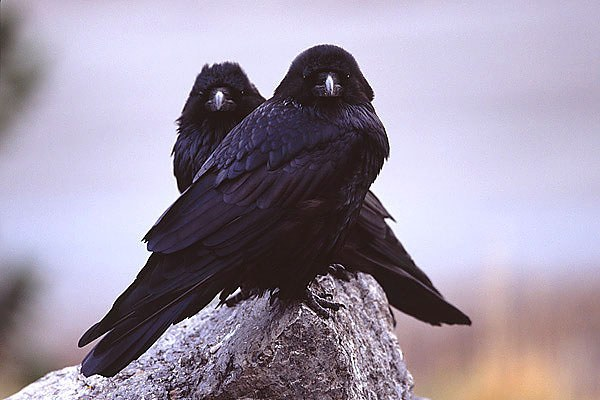 Какие птицы дольше всего живут
