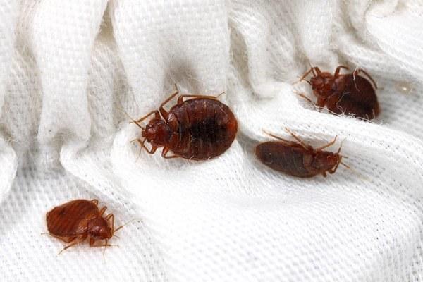 уничтожить паразитов в организме человека новые препараты