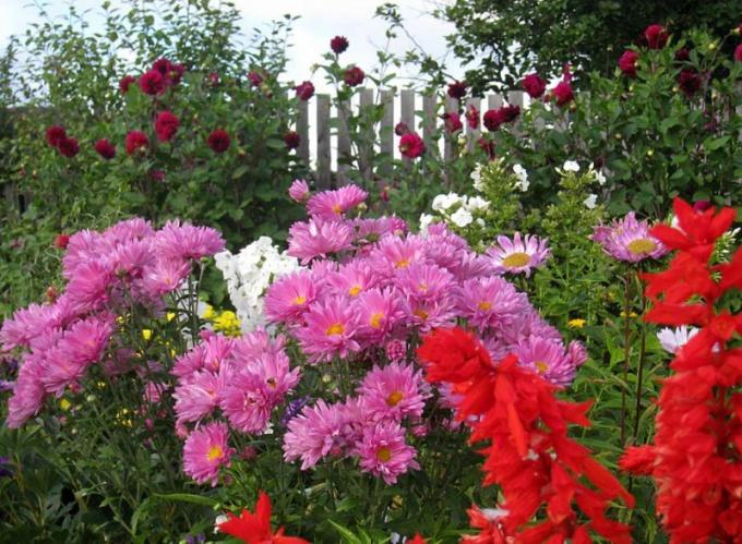 Какие цветы всего лучше сажать в огороде