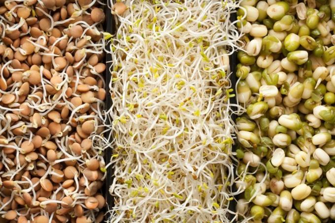 Пророщенные зерна - натуральное лекарство от всех болезней