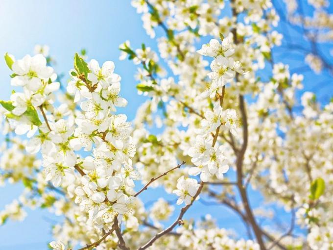 Второй месяц весны делит влияние между двумя знаками Зодиака
