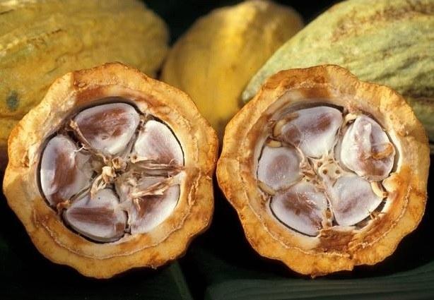 Какао масло помогает при кашле