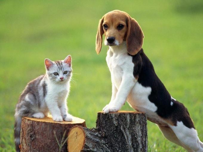 Как познакомить собаку с кошкой