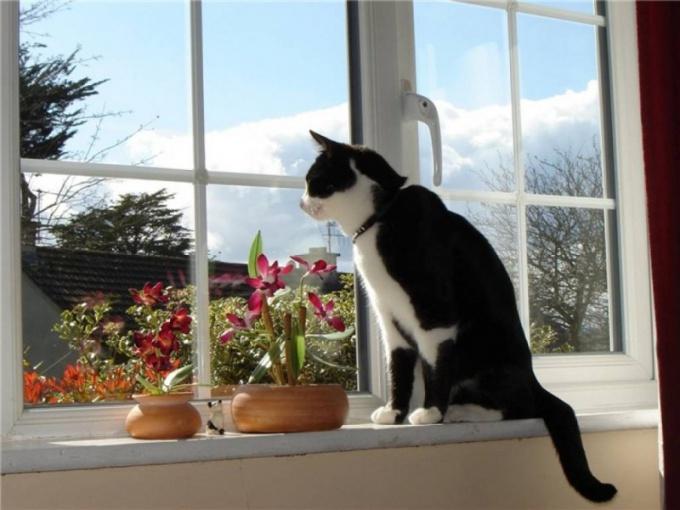 Как увеличить окно в доме