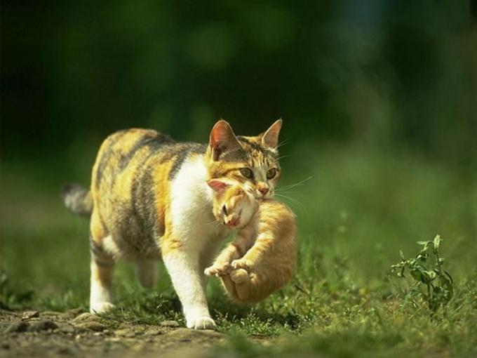 Kitten in two months