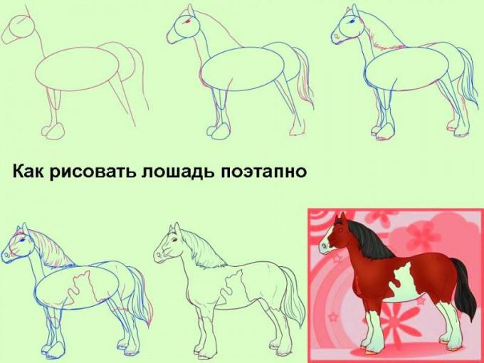 Все о лошадях: как рисовать