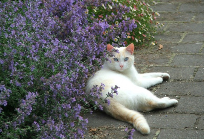 Какой запах не переносят кошки