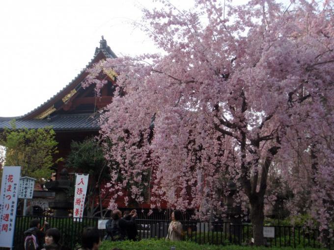 Японцы понимают счастье в созерцании природы, обретении покоя
