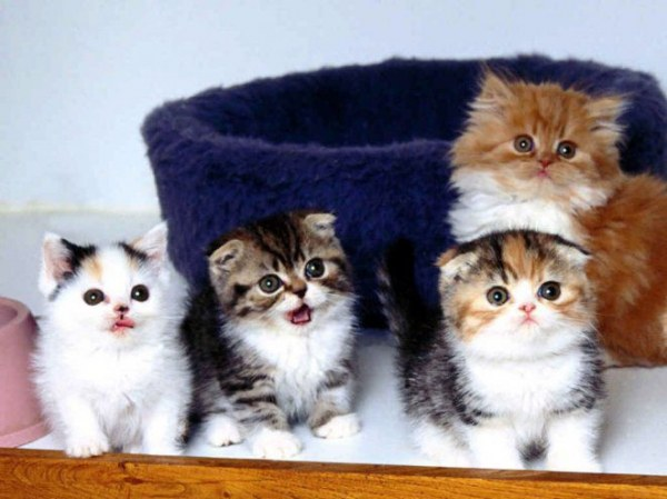 All about kittens: how to care