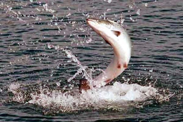 Успех рыбалки на воблер зависит от знаний и умений рыбака